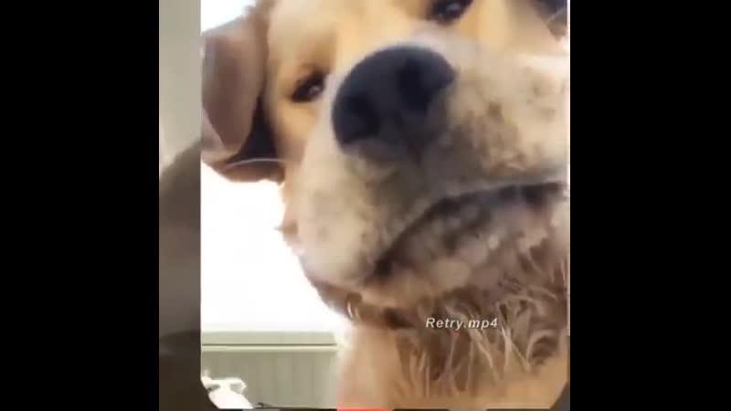 Алло!