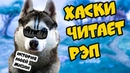 🎤 ХАСКИ ЧИТАЕТ РЭП История моей Бандитской жизни Говорящая собака