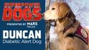 Diabetic Alert Dog: Duncan   Superpower Dogs