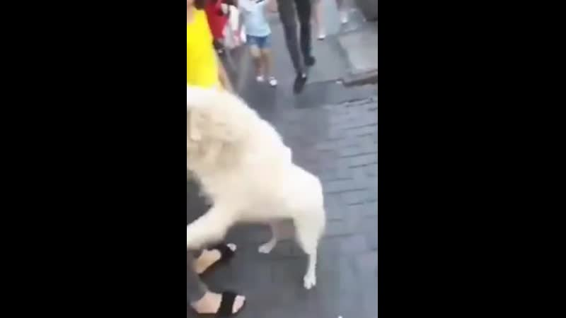 Moment a family is reunited with their lost dog outside a restaurant more than 50 miles away after the poor pooch was dog-napped