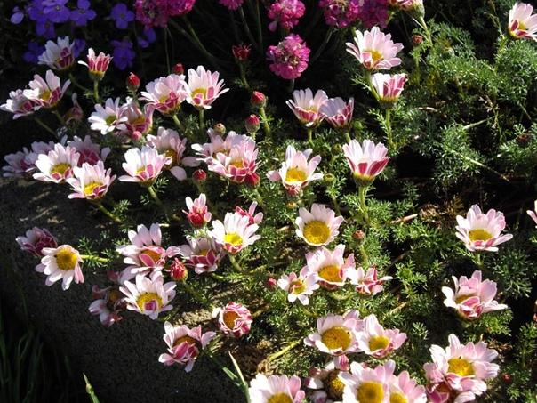 Любите растения Мечтаете создать сад своей мечты Хотите сделать его самым уютным и красивым Тогда наша группа точно для Вас