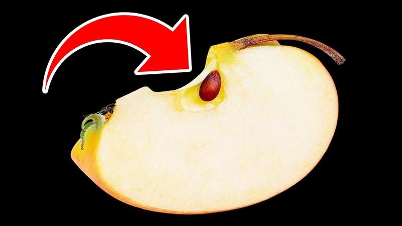Что Будет Если Случайно Съесть Яблочные Косточки