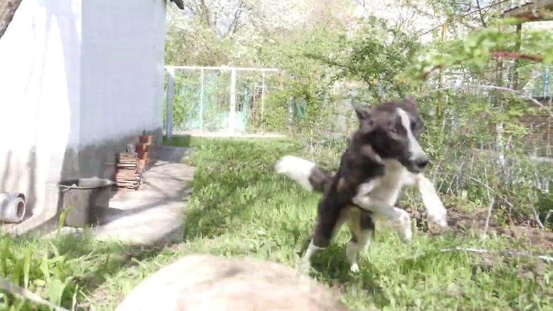 Собака Жуча в поисках семьи