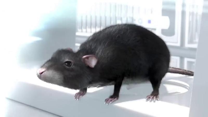 3D короткометражный мультфильм HD Одна Крыса от CHRLX и Алекс Уэйл