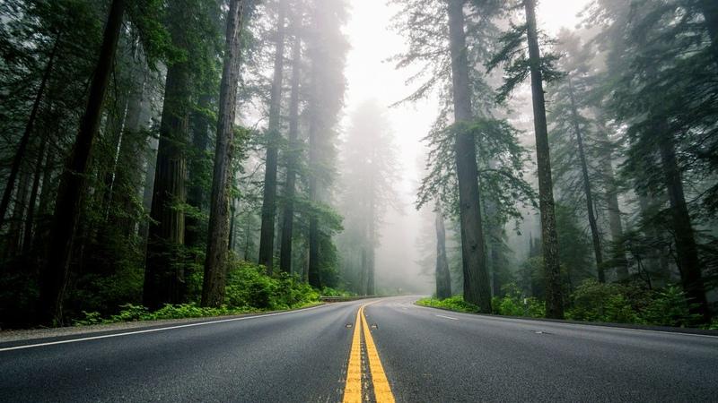 Картинка природа США дорога лес шоссе секвойи туман природа разметка