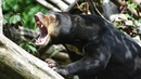 Самые агрессивные и свирепые животные на планете! С ними лучше не связываться