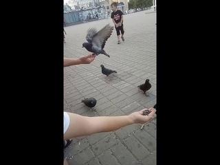 Эксгибиционист .... А мы просто кормили голубей =)