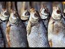 Как Солить и Сушить РЫБУ. Вяленая Рыба. Простой Способ Засолки Таранки