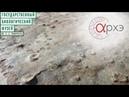 Андрей Иванцов: 57 видов медуз: загадка аспиделлы