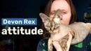 Talkative attention seeker   My life with Devon Rex
