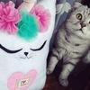 Подушки Котики | MasCats