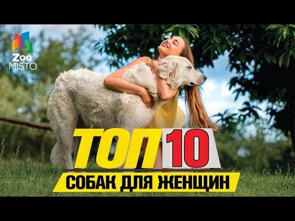 Топ 10 пород собак для женщин Top 10 dog breeds for women