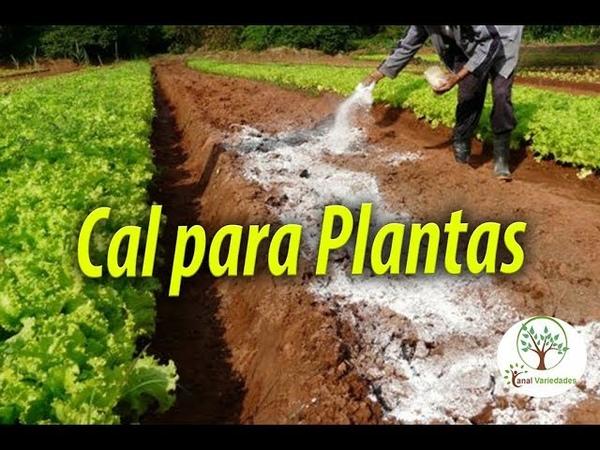 CAL DE CONSTRUÇÃO SERVE PARA PLANTAS