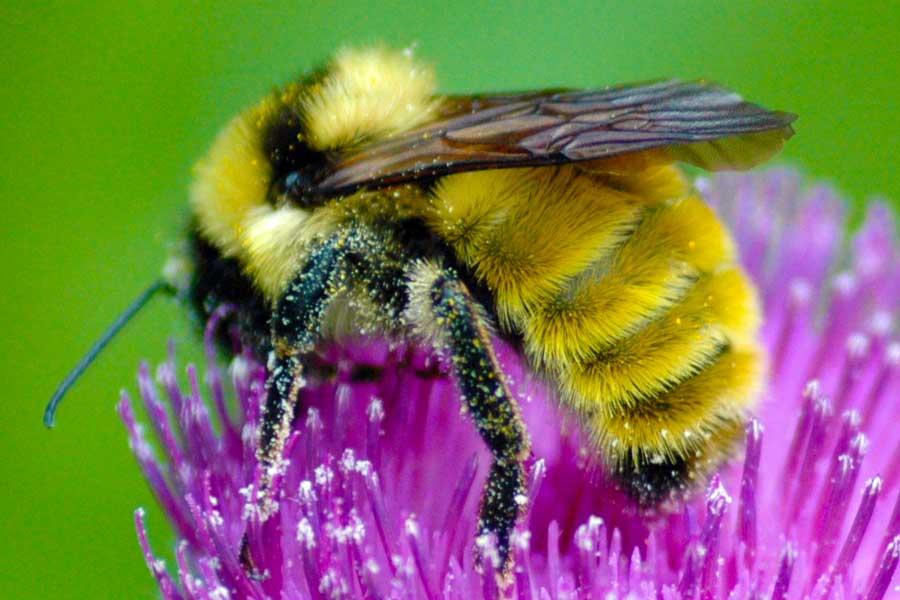 Использование пыльцы пчел для разных состояний здоровья