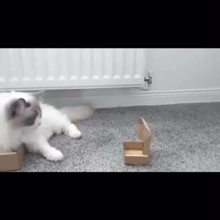 Straight_outta_pochinki video
