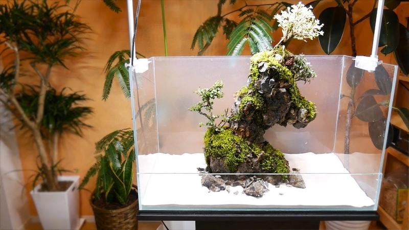 Making a Terrarium with Polyurethane Foam Spray 発泡ウレタンスプレーでテラリウムを作る