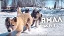 ЯМАЛ СЕГОДНЯ Жизнь в самых счастливых городах России Новый Уренгой Ноябрьск казино в тундре