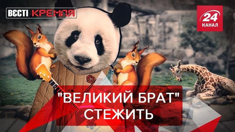 Панди Путіна живуть за Орвеллом , Вєсті Кремля, 17 черв...