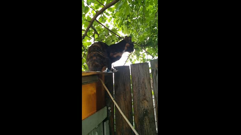 Котя ест листочек