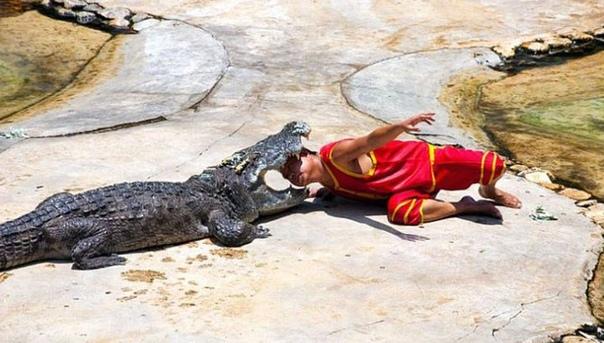 Крокодил может закрыть пасть с такой же силой, как если бы грузовик упал со скалы. Это объясняется силой мышц, которые отвечают за захлопывание пасти.А вот мышцы раскрытия пасти у крокодила