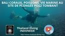 Bali coraux, poissons, vie marine au site de plongée POS2 Tombant avec Thailand Diving Pattaya Club