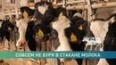 «Дело о Купаловском»: громкие отставки, ситуация на местах и что всё-таки имел в виду Лукашенко