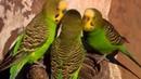 Очень красивый музыкальный успокаивающий клип - Дикая природа - самые разноцветные птицы