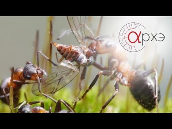 Анатолий Захаров: Муравей и муравейник