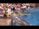 Уникальнейшее исполнение ЛАМБАДЫ Дельфины подниматели настроения