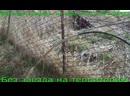 Следующее видео Бурение скважин на воду «ГидроТрансБур» 592 просмотра ГидроТрансБур 8-925-330-36-38 Похожие видео посейдон ко