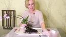 Пересадка орхидеи. Обработка перед посадкой. Часть 1.