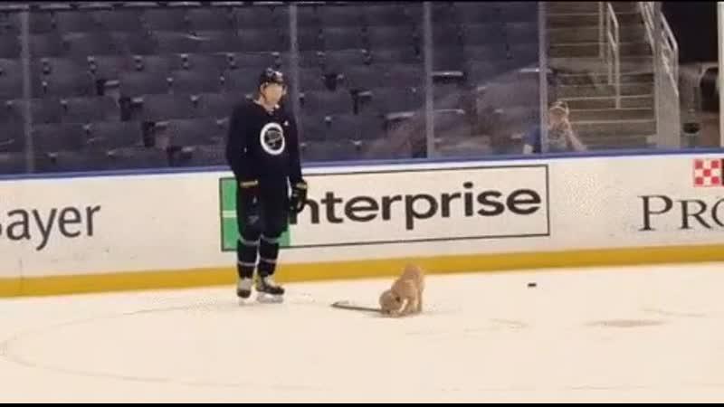 хоккейный лабрадорчик