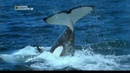 Жан-Мишель Кусто: Океанские приключения. Зов косатки - [Full HD 1080i]