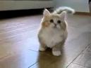 кот лижет пизду видео