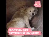 Хозяйка продержала собаку на цепи 8 лет
