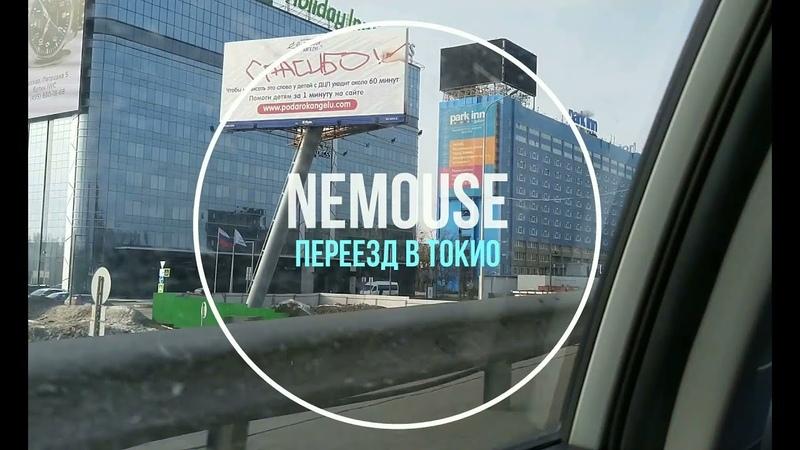 NEmouse: переезд в Токио с котом. Ч.1