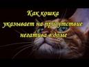 КАК КОШКА УКАЗЫВАЕТ НА ПРИСУТСТВИЕ НЕГАТИВА В ДОМЕ   The cat and the evil spirit