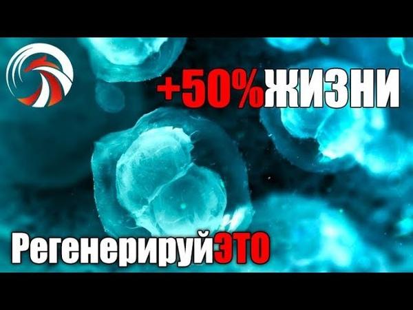 Plug In 50% к Жизни Как Перезагрузить Стволовые Клетки