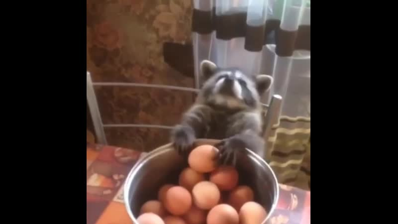 To steal an egg