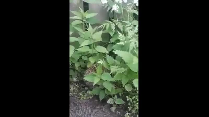 Ёжик в кропиве зовёт маму Прекрасная природа