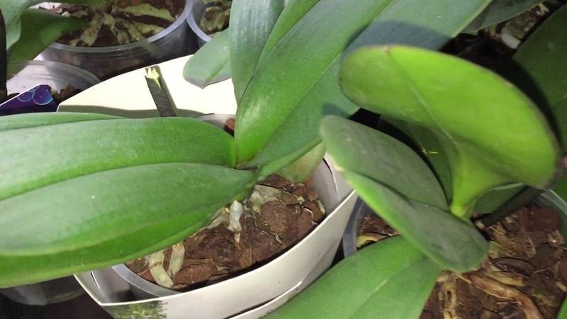 Шокирующая уценка или кладбище орхидей в Бауцентре Комментарий сотрудницы