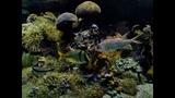 Мой фильм рыбы Монако 3