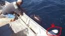 Câu cá mú điều bất ngờ là con cá phía sau nhật ký đi biển 54