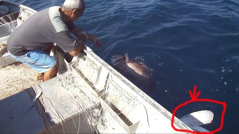 Câu cá mú điều bất ngờ là con cá phía sau | nhật ký đi biển 54