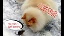 Приколы с котами с ОЗВУЧКОЙ - Смешные коты и кошки – Ржака до слёз 2018 от PSO