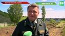 Татарстан атакует непарный шелкопряд - без урожая плодовых рискуют остаться тысячи садоводов