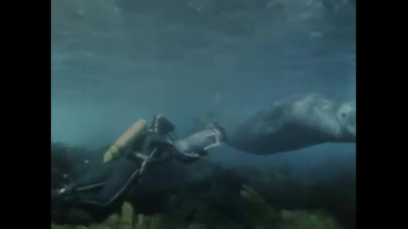 9 - Одиссея Жака Кусто - Возвращение морских слонов