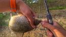 Поклевки одна за одной Рыбалка на фидер 2019. Ловля карася в заливе на донку.