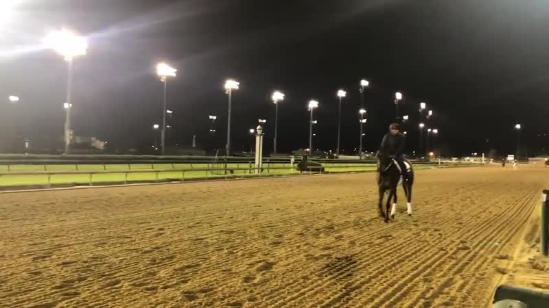 Preakness Owendale galloping out after work @ChurchillDowns Splits 12.2 24 46.4 59.1112.1 @bradcoxracing @PreaknessStakes @floth
