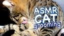 ASMR Cat Grooming 24